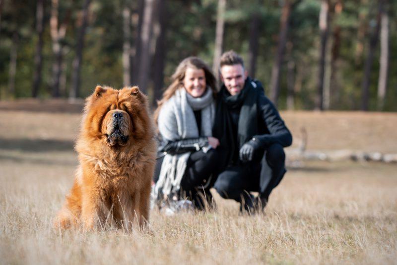 Hondenfotograaf, hondenfotografie, fotoshoot, hond, honden, pup, pups, Fotograaf, Fotografie, Fotoshoot, Dierenfotograaf, Dierenfotografie, Dieren, Oosterhout, Breda, Omgeving, Brabant, Noord-Brabant, Mikka Fotografie