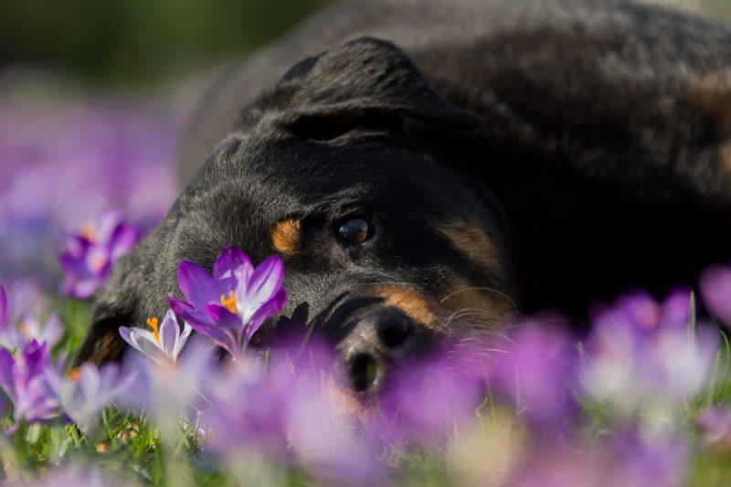 Fotografie, Fotograaf, Fotoshoot, Shoot, Dieren, Honden, Hondenfotografie, Katten, Kattenfotografie, Hondenfotograaf, Kattenfotograaf, Pups, Kittens, Dieren, Oosterhout, Breda, Brabant