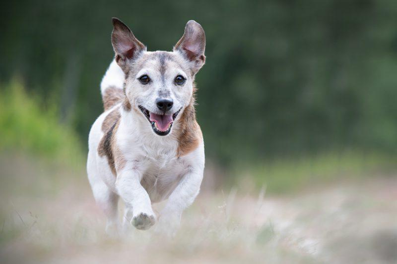 Oosterhout, Breda, Brabant, Noord-Brabant, Fotograaf, Fotografe, Fotografie, Fotoshoot, Dieren, Honden, Katten, Paarden, Pups, Kittens