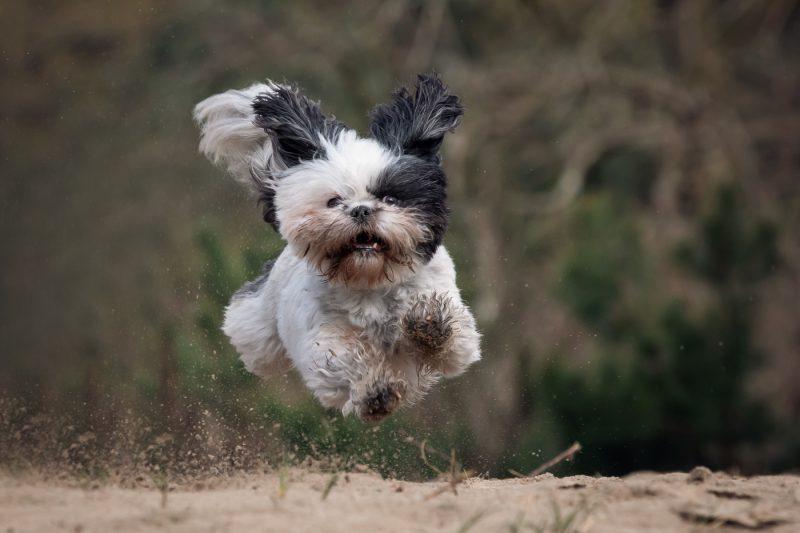 Hondenfotograaf, Kattenfotograaf, Dierenfotograaf, Fotograaf, Fotografie, Fotoshoot, Breda, Oosterhout, Brabant, Hond, Kat, Paard, Dieren