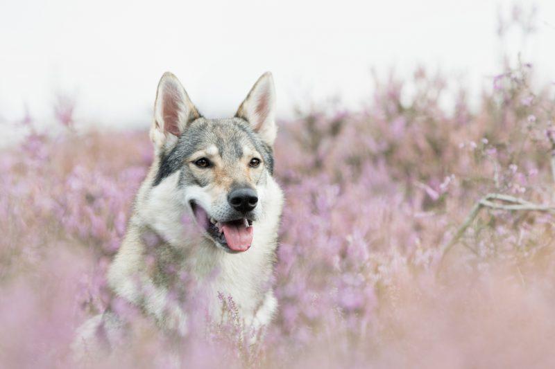 Fotograaf, Oosterhout, Breda, Noord-Brabant, Honden, Katten, Paarden, Dieren, Portretten, Fotoshoot, Shoot