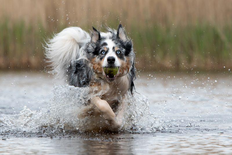 Honden, Katten, Paarden, Dieren, Hond, Kat, Paard, Fotografie, Fotoshoot, Fotograaf, Hondenfotograaf, Kattenfotograaf, Dierenfotograaf, Oosterhout, Breda, Brabant, Noord-Brabant