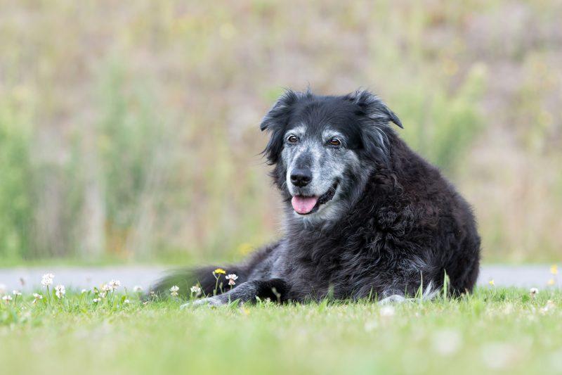 Fotograaf, Hond, Kat, Paard, Fotografie, Fotoshoot, Shoot, Oosterhout, Breda, Brabant