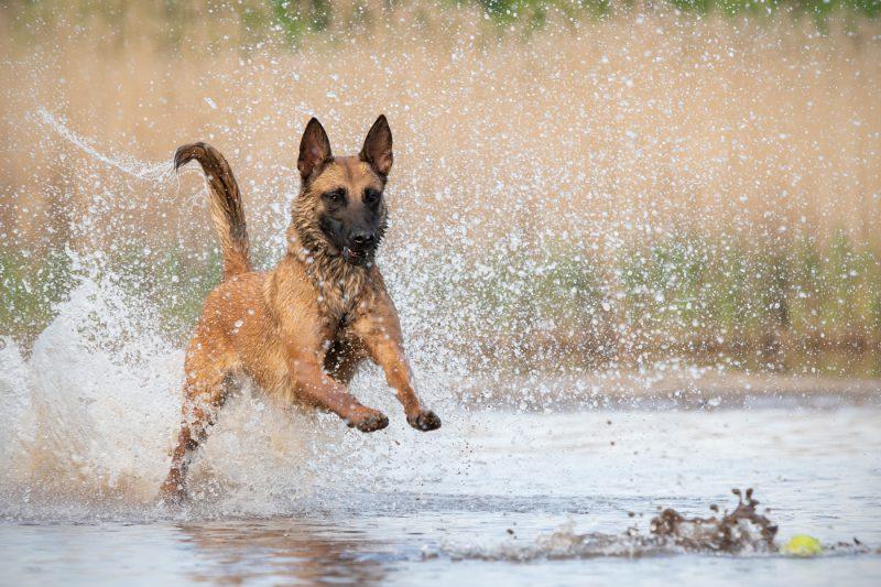 Oosterhout, Breda, Noord-Brabant, Fotograaf, Fotografie, Fotoshoot, Dieren, Honden, Katten, Paarden, Pups, Kittens