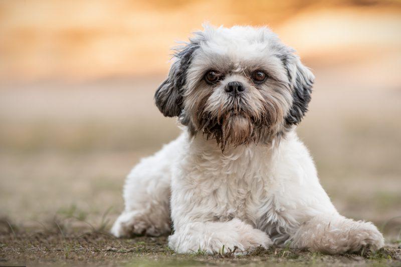 Honden, Katten, Paarden, Dieren, Pups, Hondenfotograaf, Hondenfotografie, Dierenfotograaf, Dierenfotografie, Oosterhout, Breda, Brabant, Noord-Brabant
