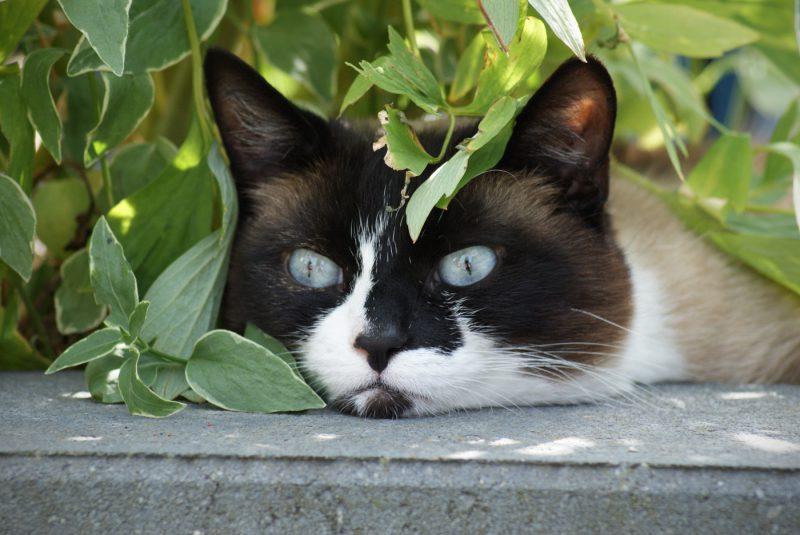 Kattenfotograaf, Kattenfotografie, Katten, Kat, Kittens, Dieren, Dierenfotograaf, Dierenfotografie, Fotograaf, Fotografie, Fotoshoot, Oosterhout, Breda, Noord-Brabant, Brabant