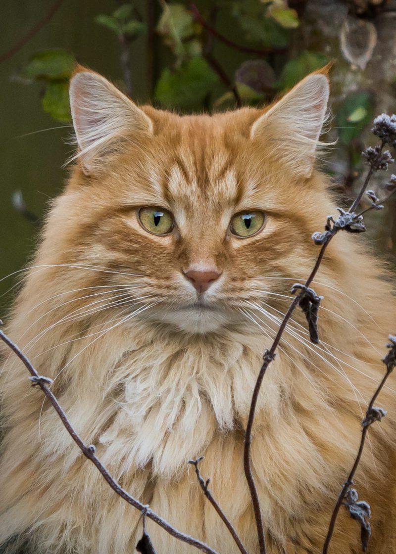 Kattenfotografie, Kattenfotograaf, Katten, Kat, Kitten, Fotograaf, Fotografe, Fotografie, Oosterhout, Breda, Brabant, Noord-Brabant, Portret