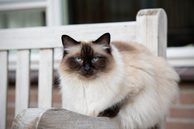 Kattenfotograaf, Kattenfotografie, Katten, Kat, Kitten, Dierenfotograaf, Dierenfotografie, Fotograaf, Fotografie, Fotoshoot, Oosterhout, Breda, Noord-Brabant, Brabant, Mikka Fotografie