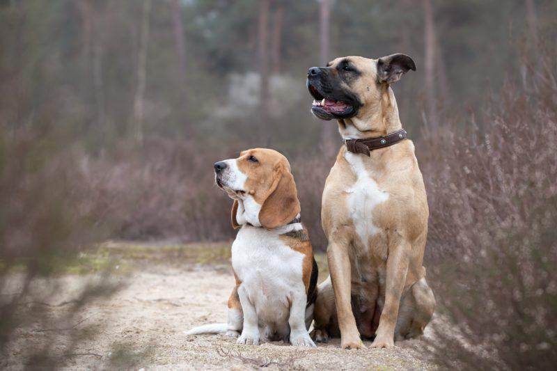Fotograaf, Oosterhout, Breda, Brabant, Noord-Brabant, Honden, Hond, Katten, Kat, Paard, Paarden, Dieren, Portretten