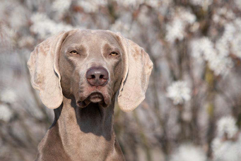 Hondenfotografie, Hondenfotograaf, Kattenfotografie, Kattenfotografie, Honden, Hond, Kat, Katten, Dieren, Dierenfotograaf, Oosterhout, Breda, Brabant