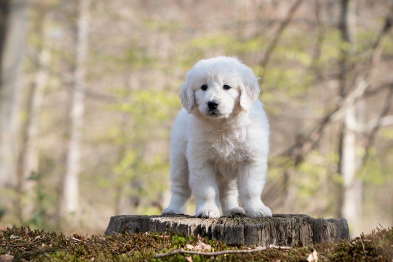 Hondenfotograaf, Kattenfotograaf, Hondenfotografie, Kattenfotografie, Dierenfotograaf, Dierenfotografie, Hond, Honden, Pup, Pups, Oosterhout, Breda, Brabant, Noord-Brabant