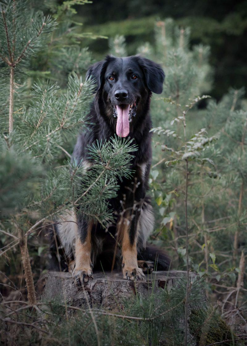 Fotografie, Oosterhout, Fotograaf, Fotoshoot, Breda, Brabant, Honden, Hond, Katten, Kat, Paarden, Paard, Dieren