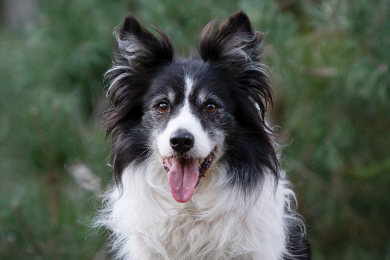 Hondenfotograaf, Hondenfotografie, Hond, Honden, Fotograaf, Fotografie, Fotoshoot, Foto, Portret, Oosterhout, Breda, Brabant