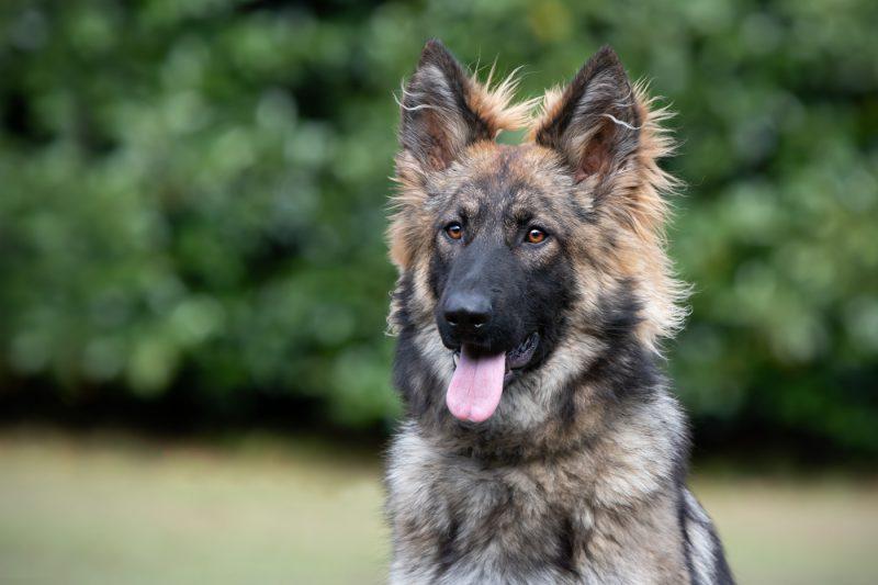 Hondenfotografie, Hondenfotograaf, Dierenfotograaf, Dierenfotografie, Hond, Honden, Oosterhout, Breda, Noord-Brabant, Brabant, Fotoshoot, Fotograaf, Fotografe, Fotografie
