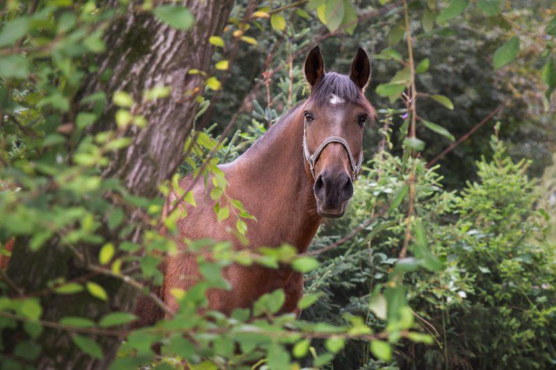 Paarden, Paard, Paardenfotograaf, Paardenfotografie, Fotograaf, Fotografie, Fotoshoot, Oosterhout, Breda, Omgeving, Noord-Brabant, Brabant, Dierenfotograaf, Dierenfotografie, Dieren, Mikka Fotografie