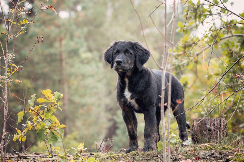Fotograaf, Oosterhout, Fotografie, Fotoshoot, Breda, Omgeving, Brabant, Noord-Brabant, Dieren, Honden, Katten, Paarden, Pups, Kittens, Hond, Kat, Paard