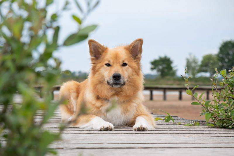 Honden, hond, hondenfotografie, hondenfotograaf, fotoshoot, Oosterhout, Breda, Brabant, Noord-Brabant